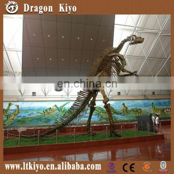 Zigong Long Teng Dinosaur Fossil Supplier For High Quality Dinosaur Skeleton