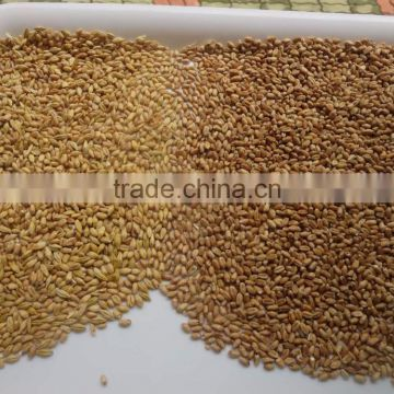 Color Sorter Equipment / Wheat Color Sorter Supplier