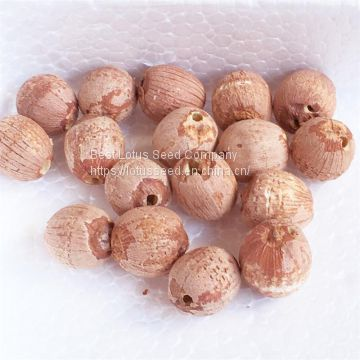 Lotus Seed Lotus Nut Lotus Kernel Dried Red Lotus Seed Brown Lotus Seed Without Core Plumule