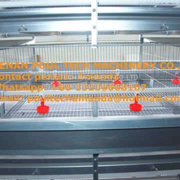 Brazil Poultry House Management for Chicken Breeds with Automatic Pullet Cage & Baby Chicken Coop in Small Chick Shed