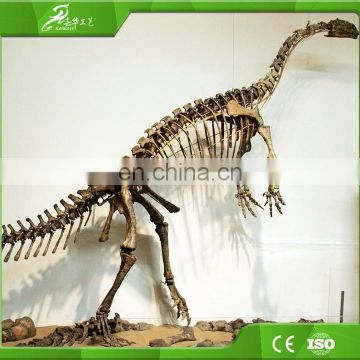 KAWAH High Quality Park museum exhibition Complete Dinosaur Skeleton For Sale