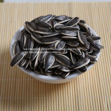 sunflower seeds type 5009