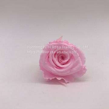 Preserved Real Natural Long Lasting Eternity Roses Head For DIY Forever Flower Box