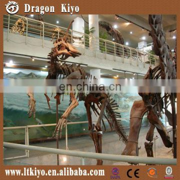 Life size museum quality dinosaur skeleton for exhibition