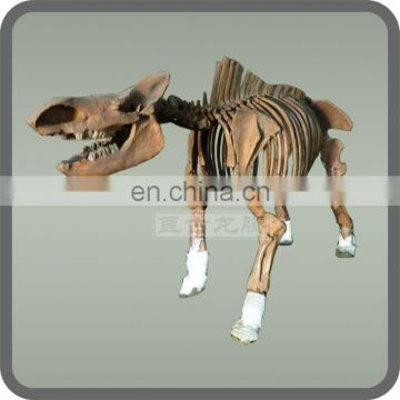 Replica animal skeletons wholesale