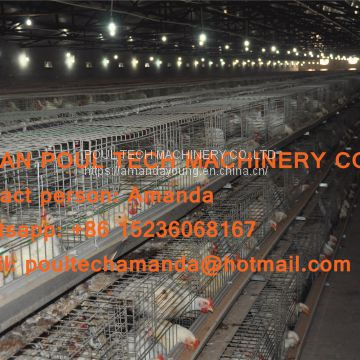 Russia Poultry Farming Equipment Broiler Cage & Broiler Coop & Meat Chicken Cage in Chicken Shed