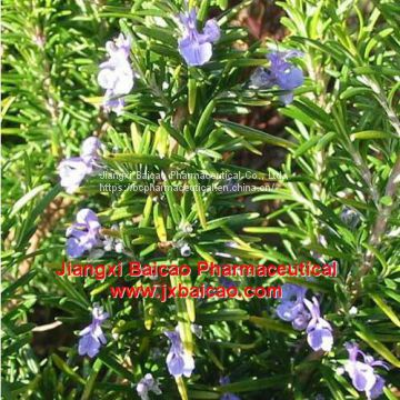 OEM/ODM high purity natural Cheap Price manufacturer plant essential oil rosemary mint essential oil for skin
