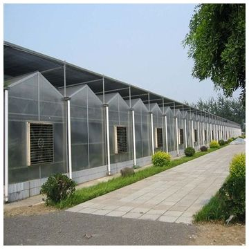 Commercial Multispan Polycarbonate Sheet Covering Greenhouse