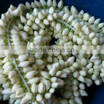 Fresh Jasmine Flower Exporter for / Importers in Malaysia