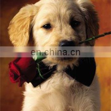 Fashion promotion PET/PP advertising poster with 3d effect