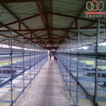 Namibia Poultry Farming Battery Broiler Cage & Meat Chicken Cage & Chicken Coop in Chicken Shed