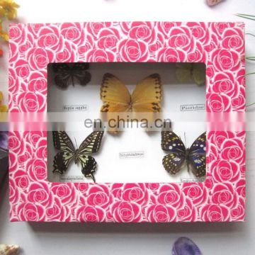 foaming frame real butterfly frame wholesale for home decoration use 20*25cm