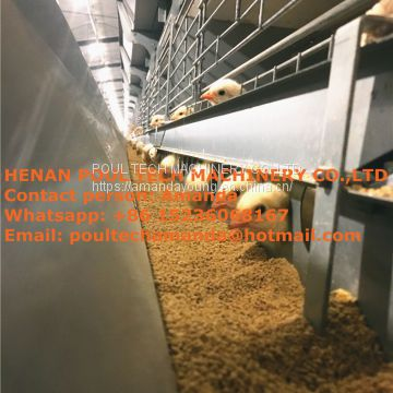 Qatar Chicken Shed With Poultry Cage For Chicken Feed For