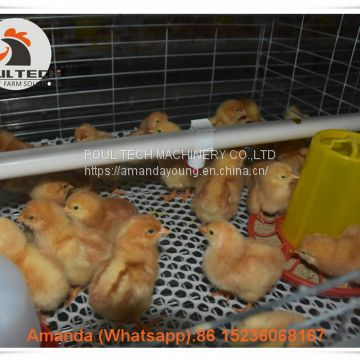 Colombia Selling Poultry Farming Baby Chick Cage & Automatic Small Chicken Cage & Pullet Coop with Feed Trough for 5000 Chicks in Chicken Shed