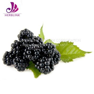 High Quality Anthocyanin1%-25% Mulberry Extract