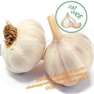 wholesale roasted garlic powder