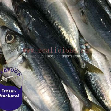 Best Quality Frozen Pacific Mackerel with Fat Content 60