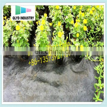 China Eco-friendly Agricultural Black PP Weaven Plastic Ground Cover