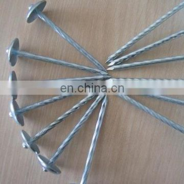 galvanized nails / roofing nails hot dipped nails