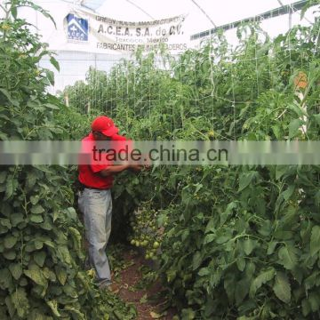 PE plant support net support crops clambing mesh net