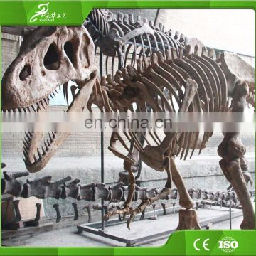 2013 display dinosaur skeleton model for sale