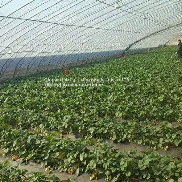 China's intelligent greenhouse, linked greenhouse, vegetable greenhouse manufacturers