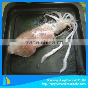 fresh frozen squid whole round