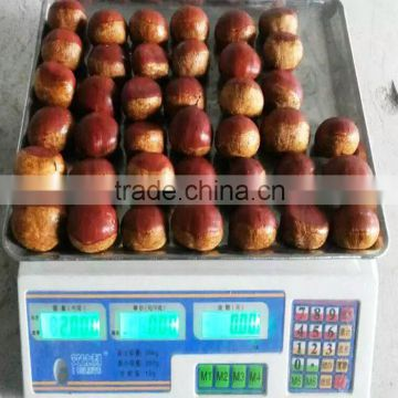 Bulk High Quality Fresh Green Dandong Chestnuts for Sale
