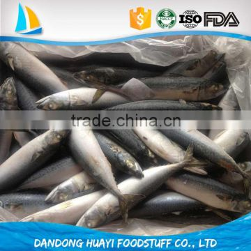frozen mackerel fish horse mackerel