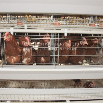 Layer chicken cages & battery poultry cages for poultry layer farm