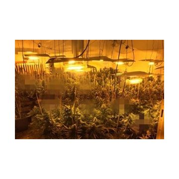 Auto Light Deprivation 30' Span Marijuana Growing Greenhouse