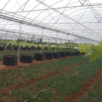 Commercial PE/PO Film Greenhouse for Vegetable Production
