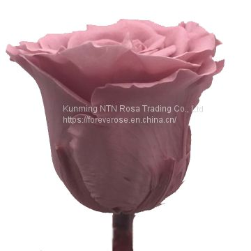 No plastic flower Artificial luxury and colorful preserved natural flowers long life