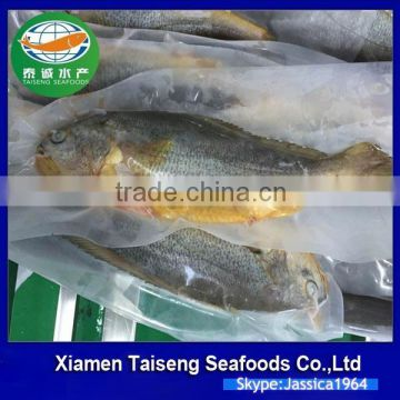 China Seafood Supplier Frozen Yellow Croaker With good quality of