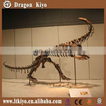 2015 ZiGong Long Teng Life Size Replica Dinosaur Fossils for hot Sale