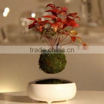 Magnetic Levitating Wholesale Bonsai Trees And Pot For Sale Of Levitation Bonsai From China Suppliers 143976788