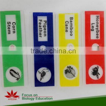 Fixed items most popular 12pieces botany children plastic biology prepared slides