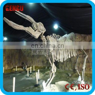 Artificial Mechanical Life Size Museum Animal Skulls For Sale
