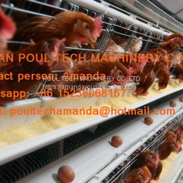 Cameroon Poultry Farm A Type Automatic Laying Hen Cage & Egg Hen Coop & Chicken Coop with 90-200 birds in Chicken Coop