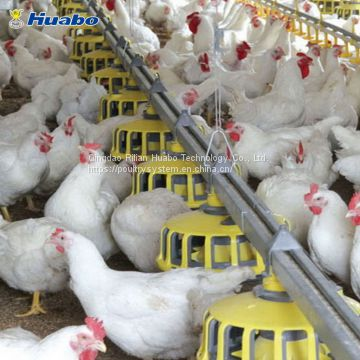 Auto Poultry Feeding Equipment System For Breeder Farm