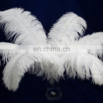 top quality white color ostrich feather