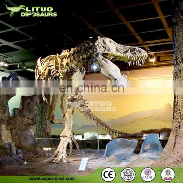 Life Size T-rex Dinosaur Skeleton Fossil for Exhibition