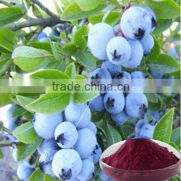 Acai Fruit extract / Euterpe badiocarpa extract / Brazilian Acai powder of  Vitamin C