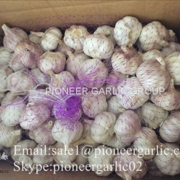 New Crop Fresh Chinese Normal White Garlic (5.0cm, 5.5cm, 6.0cm)Mesh Bag Or Box Packing