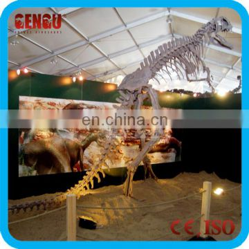 Attractive And High Simulation Prehistoric Dinosaur Skeleton Model
