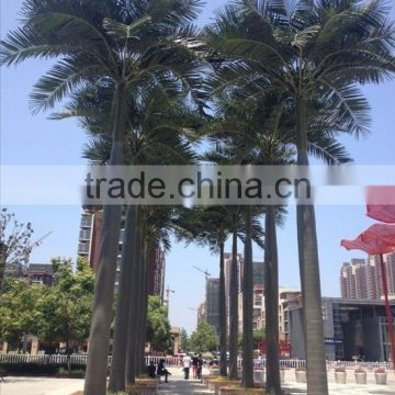 fake coconut tree Resist wind,frost,rain,UV,snow&decay artificial palm tree