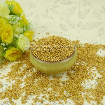 Good Price China Factory Organic Yellow Millet In Husk On Sale
