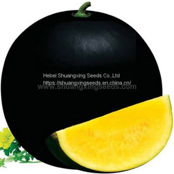 Black girl 2 Chinese yellow flesh watermelon seeds for planting