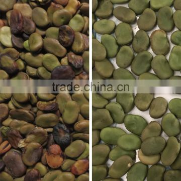 Best selling fava bean selecting machine price