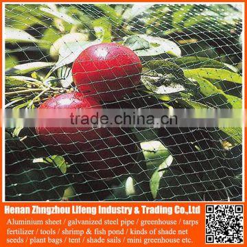 safety dark pe greenhouse anti bird net , nylon agricultural